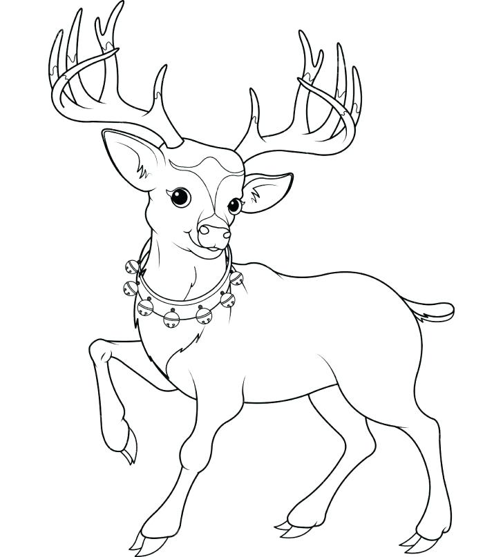 728x807 Baby Deer Coloring Sheets Printable Coloring White Tailed Deer