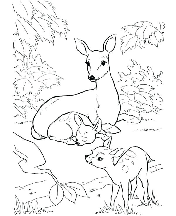 600x734 Coloring Pages Draw A Deer Mule Deer Coloring Page Deer Deer