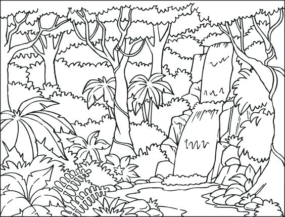564x429 Rainforest Coloring Page Coloring Book Tropical Coloring Page