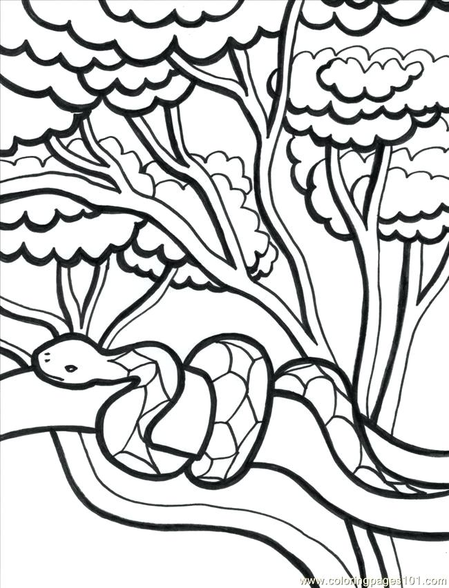 650x852 Coloring Page Coloring Book Tropical Coloring Page Pages