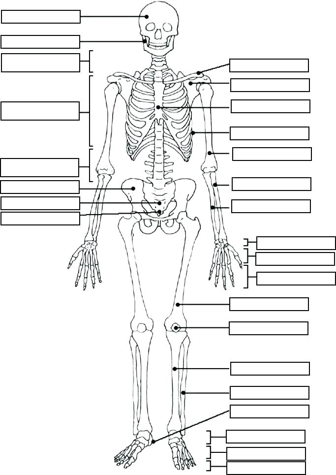 683x965 Muscular System Coloring Pages Anatomy Coloring Book Muscles Plus