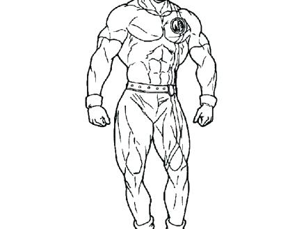 440x330 Muscular System Coloring Pages Anatomy Muscle Coloring Pages