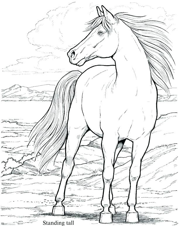 615x770 Marvellous Mustang Horse Coloring Pages Beautiful Mustang Horse