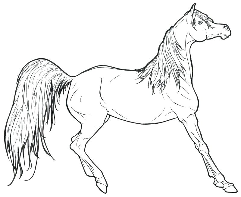 800x653 Mustang Horse Coloring Pages Horses Coloring Pages Packed