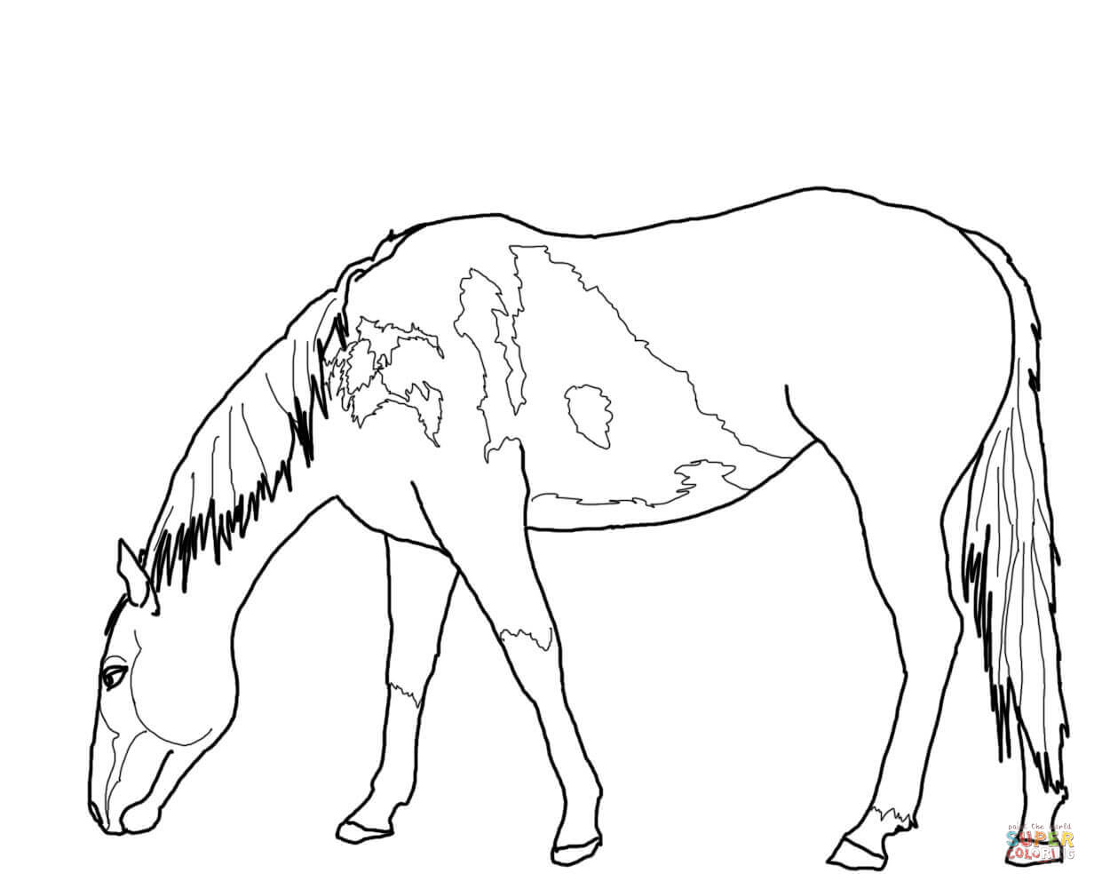 1232x992 Beautiful Mustang Horse Coloring Page Free Printable Coloring