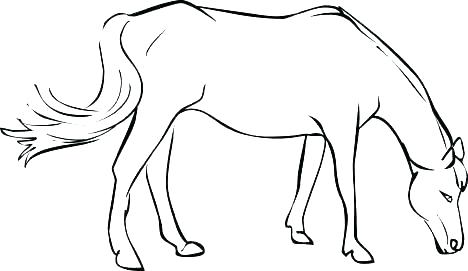 468x271 Horse Coloring Page