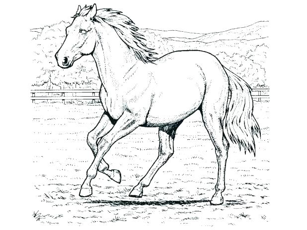 618x464 Mustang Horse Coloring Pages