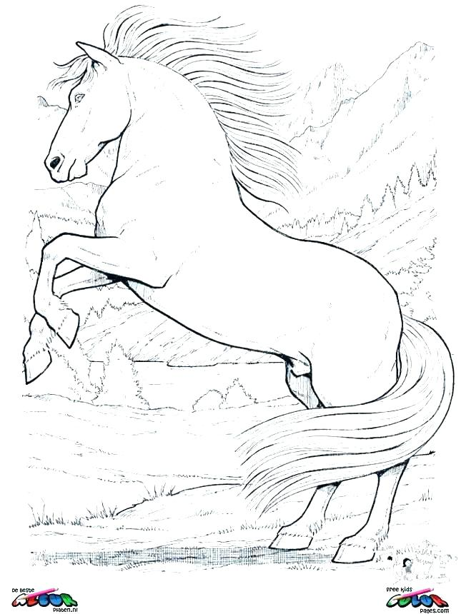 645x860 Horse Colouring Pages Horse Colouring Pages Horse Color Page