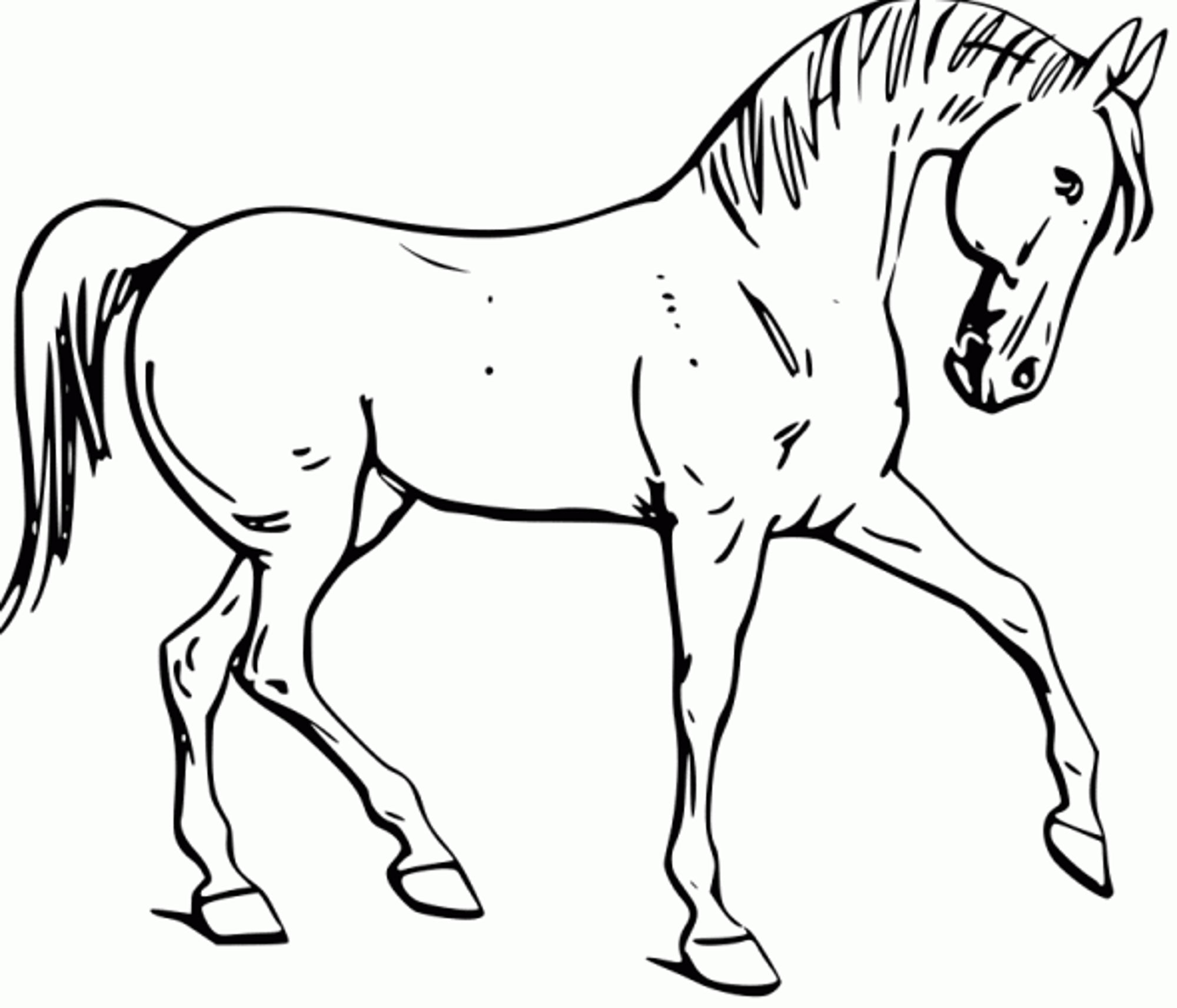 2000x1712 Coloring Pages Horses Horses Coloring Page Mustang Horse Coloring