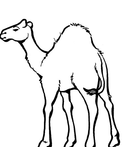 Nativity Animals Coloring Pages
