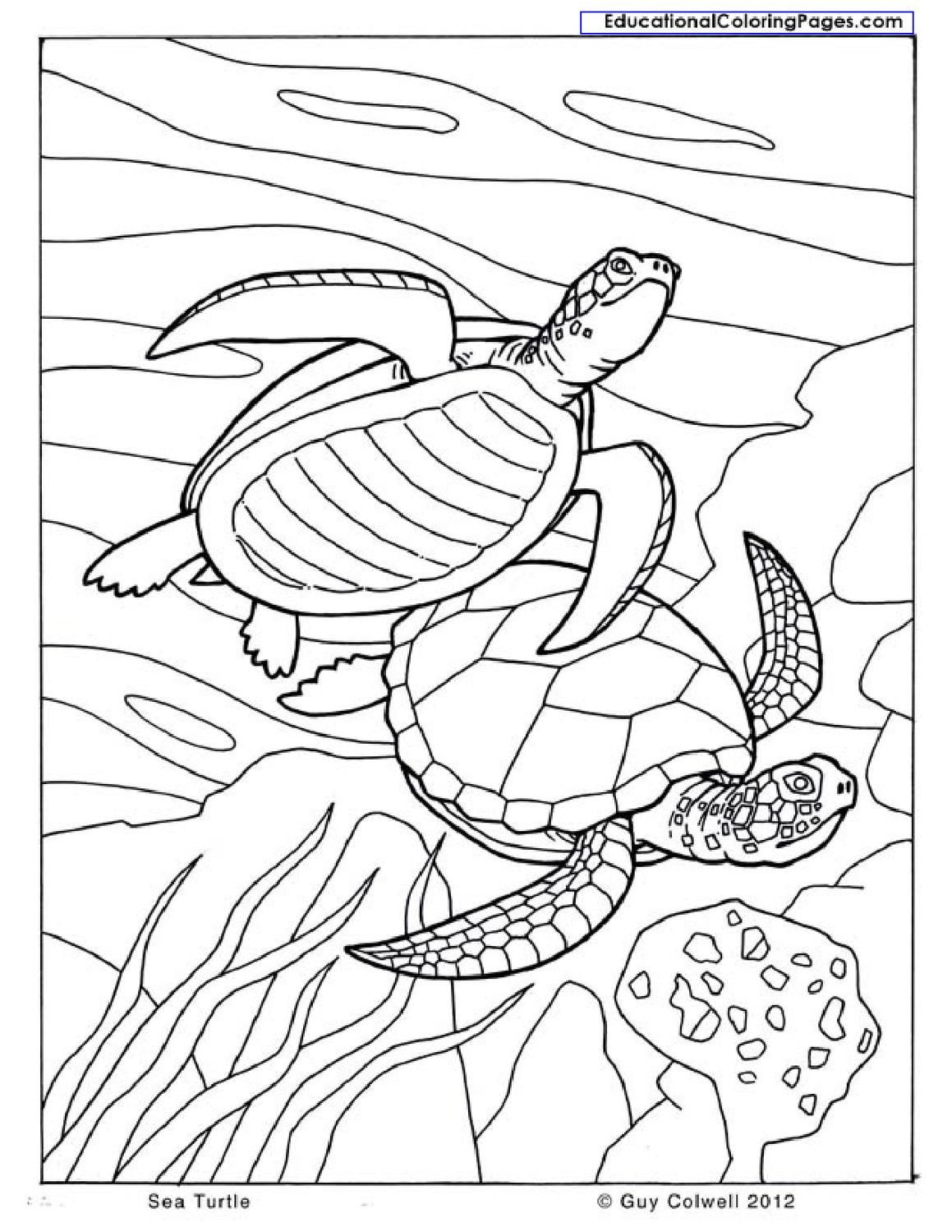 1159x1499 Natural Coloring Books Coloring Books, Natural And Books