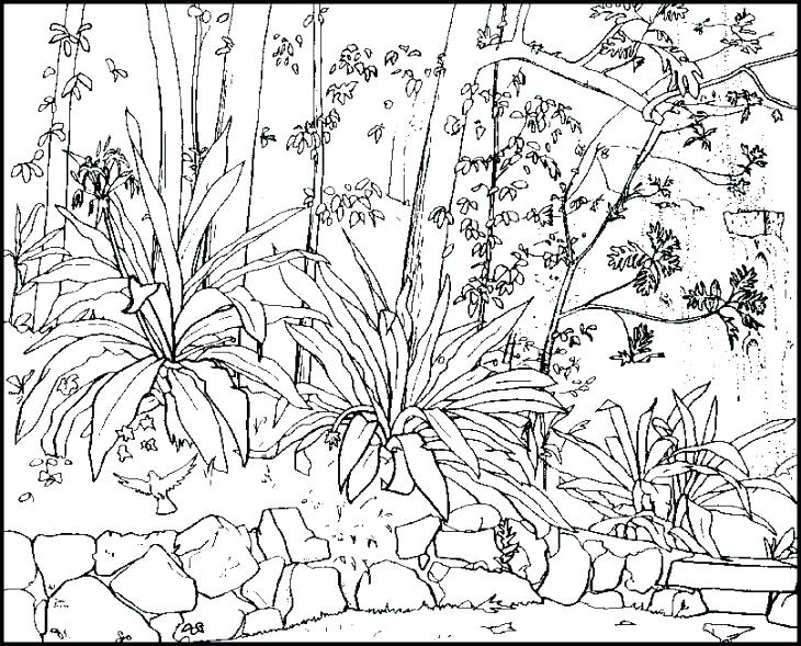 730x589 Nature Coloring Pages Awesome Free Printable Nature Coloring Pages