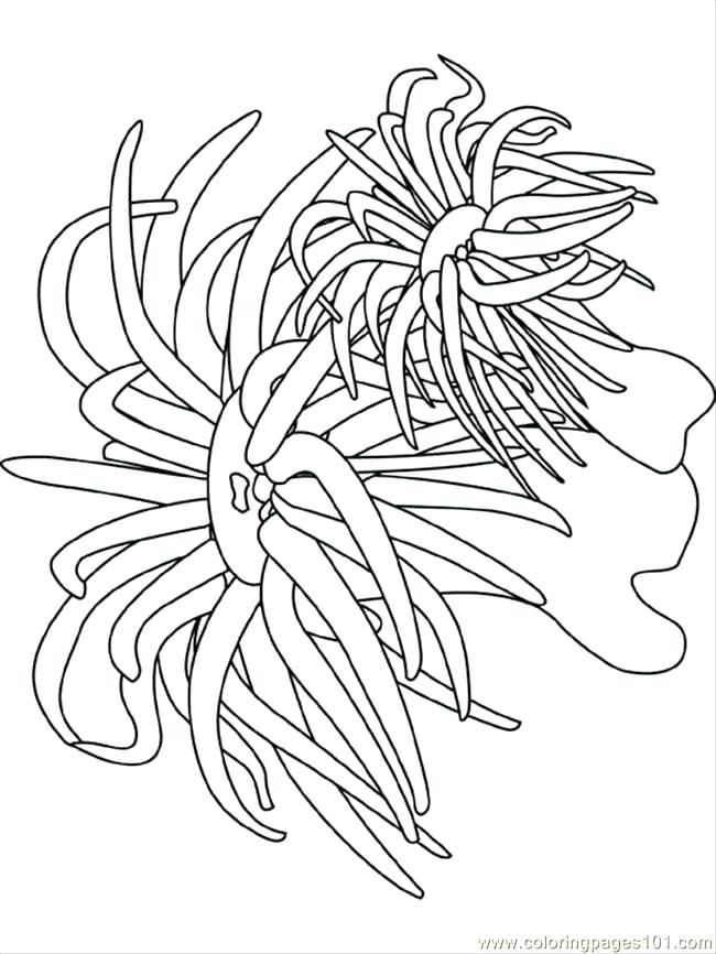 650x866 Sea Urchin Coloring Page Ocean Coloring Pages Coloring Pages Sea