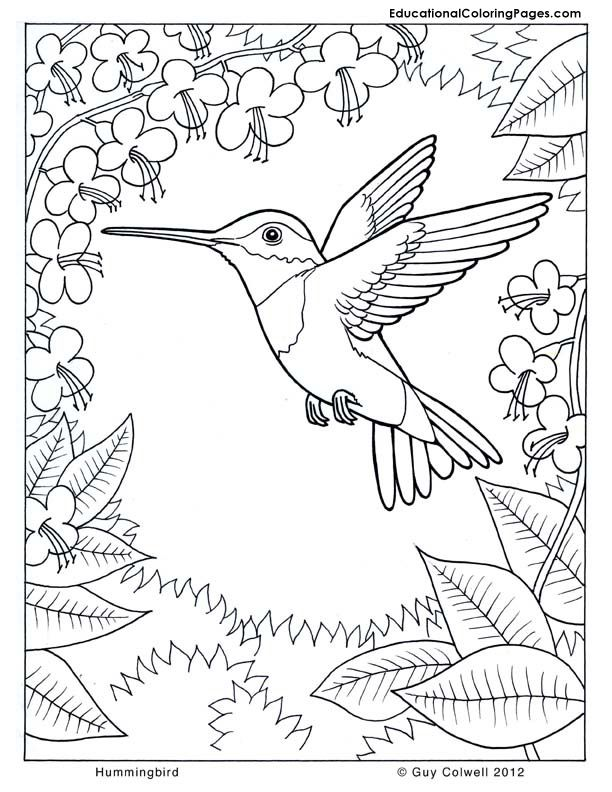 612x792 Coloring Pages Hummingbirds Hummingbird Coloring, Flower
