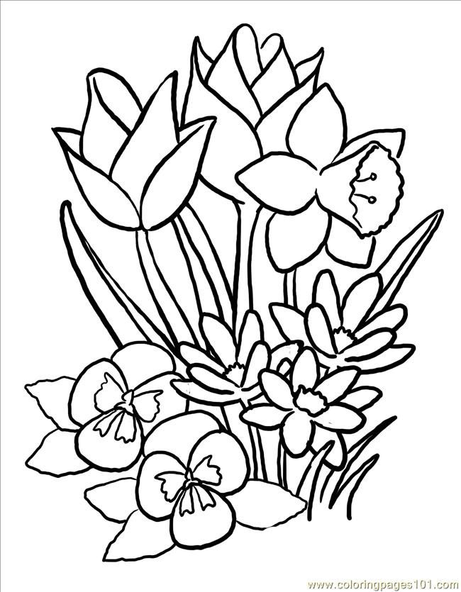 650x835 Flower Coloring Pages For Adults Free Printable Coloring Page