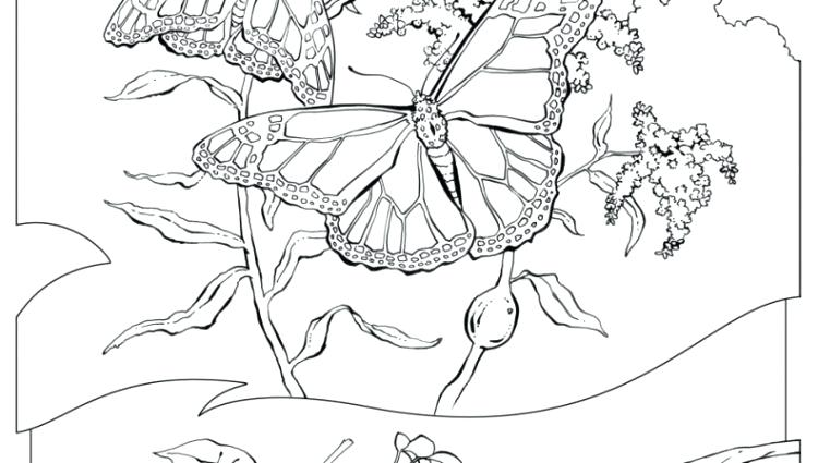 750x425 Natural Resources Coloring Pages Net Imge Wllpper Downlod Nturl