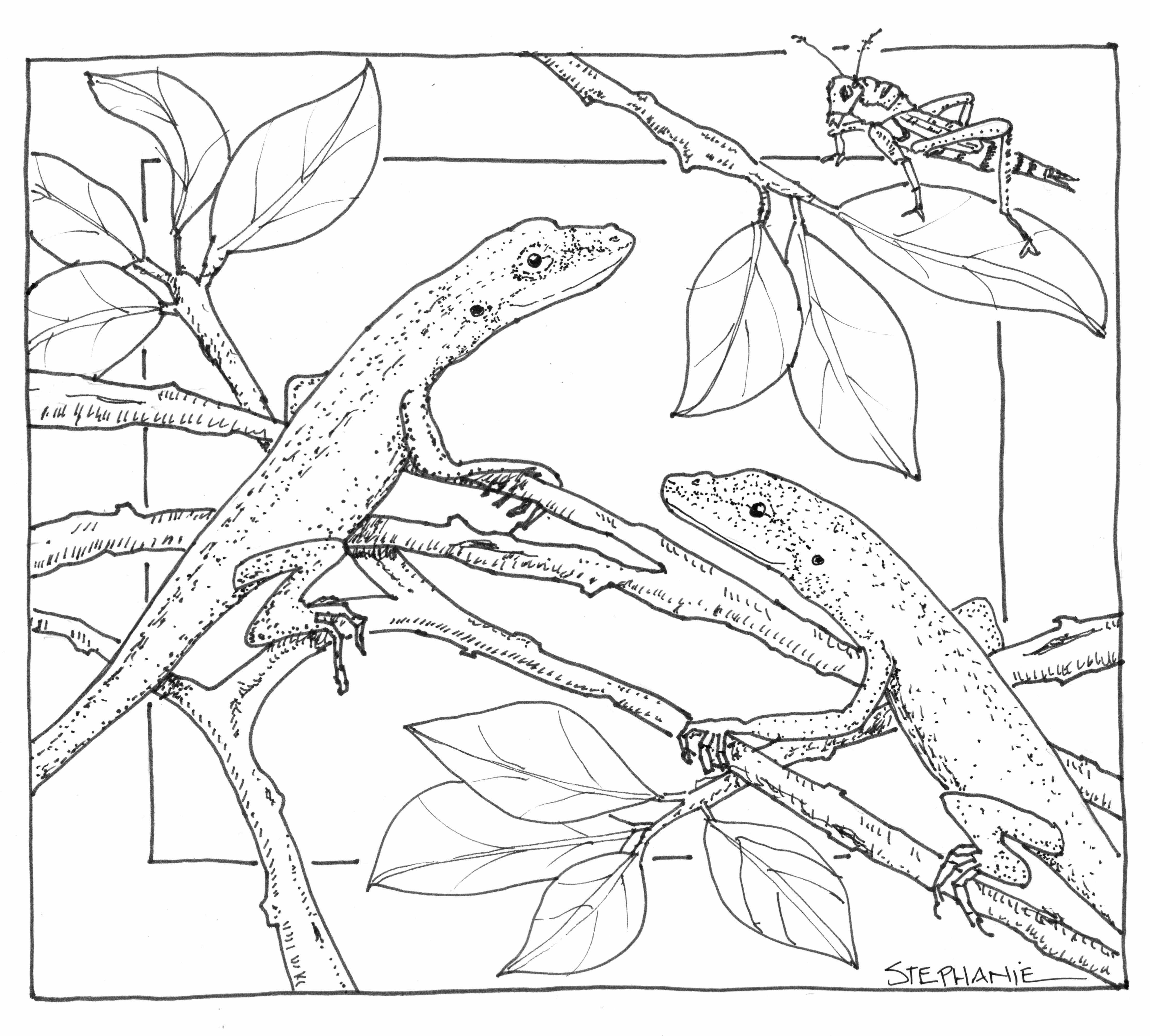 Nature Coloring Pages at GetDrawings.com | Free for personal use ...