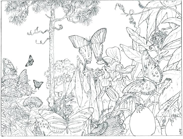736x559 Coloring Pages Nature Coloring Pages Nature Coloring Pages