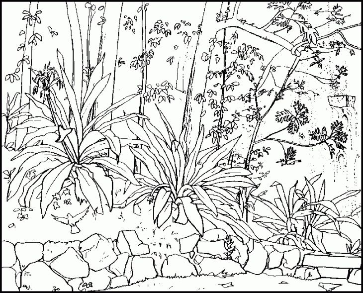 730x589 Nature Coloring Pages For Adults Coloring Pages For Adults Nature