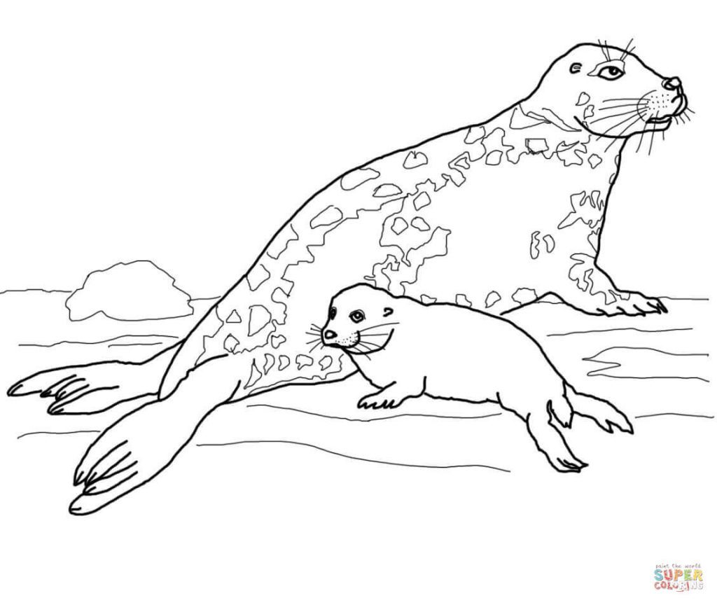 1024x864 Seal Coloring Pages Image Highest Clarity Cute Leopard Baby Harp