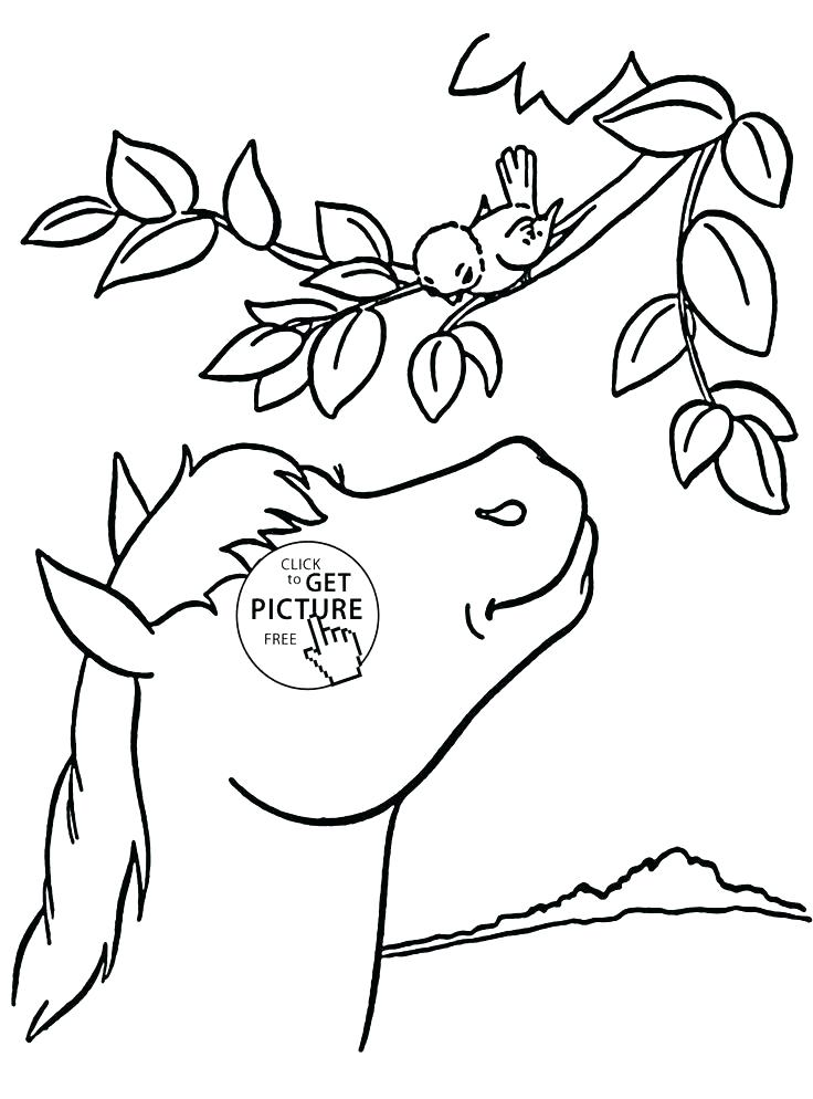 736x994 Seal Coloring Pages Leopard Seal Coloring Pages Horse And Bird
