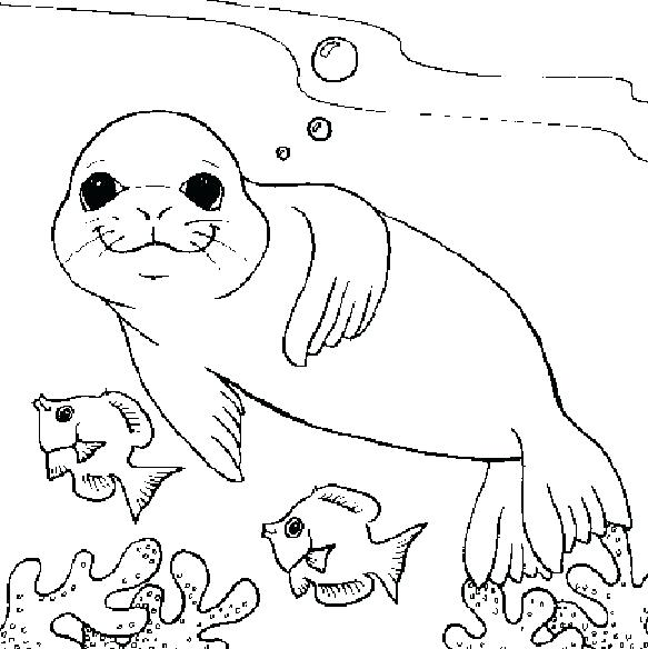583x584 Seals Coloring Pages Seal Coloring Page Pages Coloring Trend