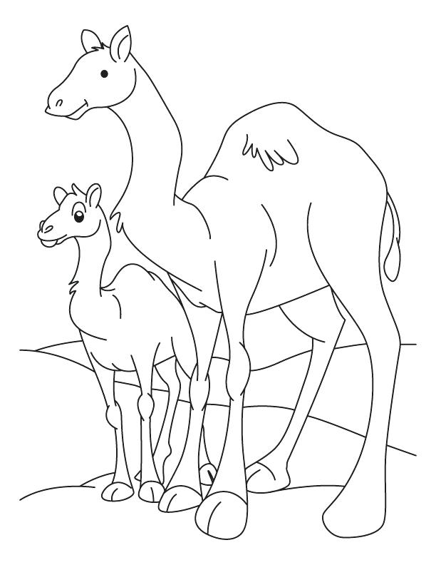 612x792 Camel Coloring Page Camel Outline Coloring Pages Bactrian Camel