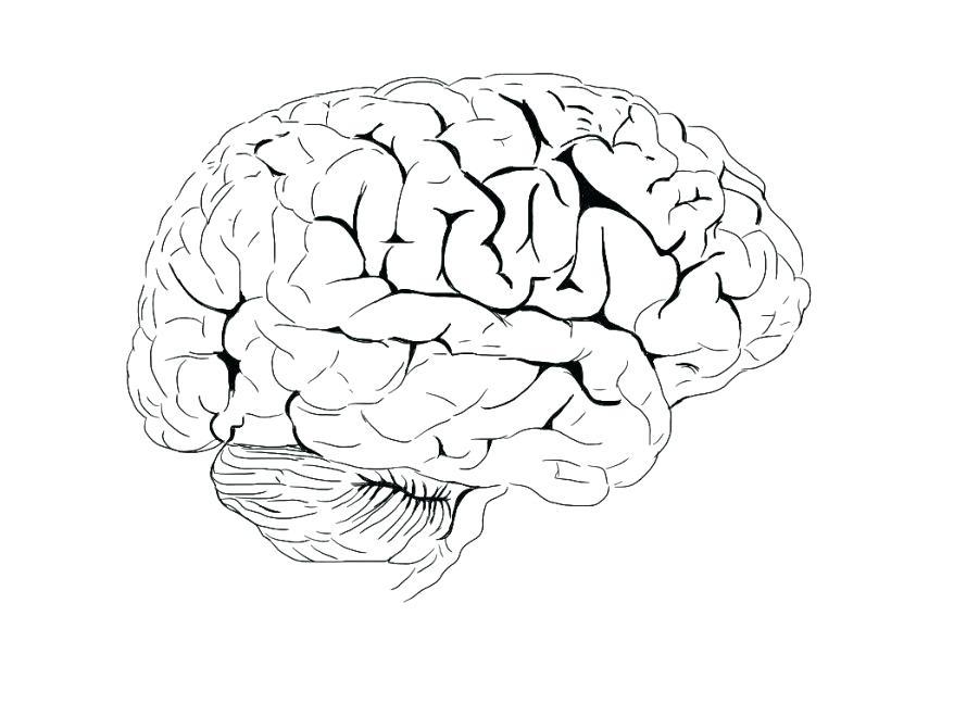 878x659 Brain Coloring Worksheet Nervous System Coloring Worksheet Nervous