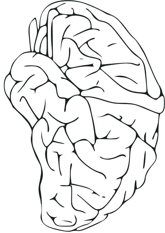 531x750 Central Nervous System Coloring Pages Worksheet Best Images