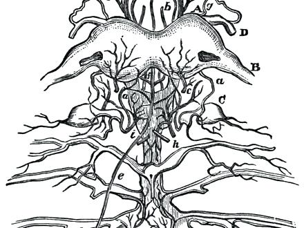 440x330 Nervous System Coloring Page Coloring Pages Of The Human Nervous