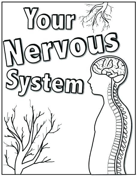 457x586 Nervous System Coloring Page Nervous System Color Pages Nervous