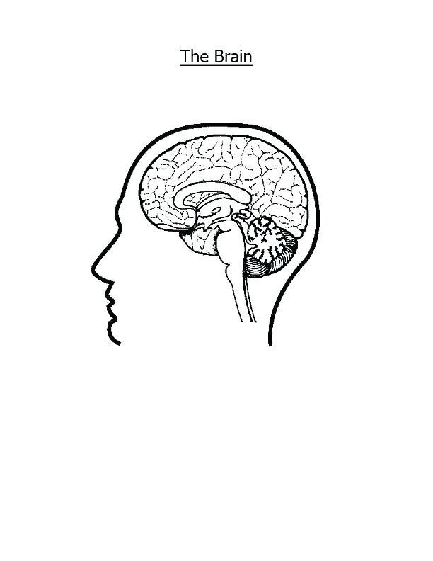 612x792 Nervous System Coloring Page Nervous System Colouring Pages