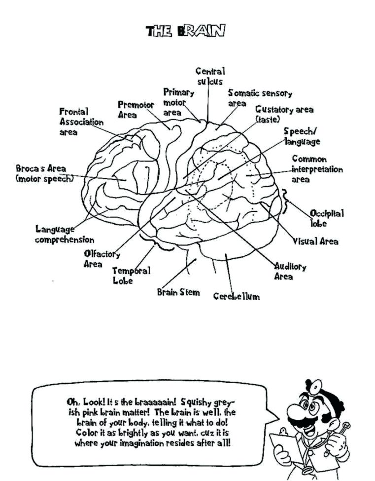 761x974 Nervous System Coloring Worksheet Coloring Nervous System Coloring