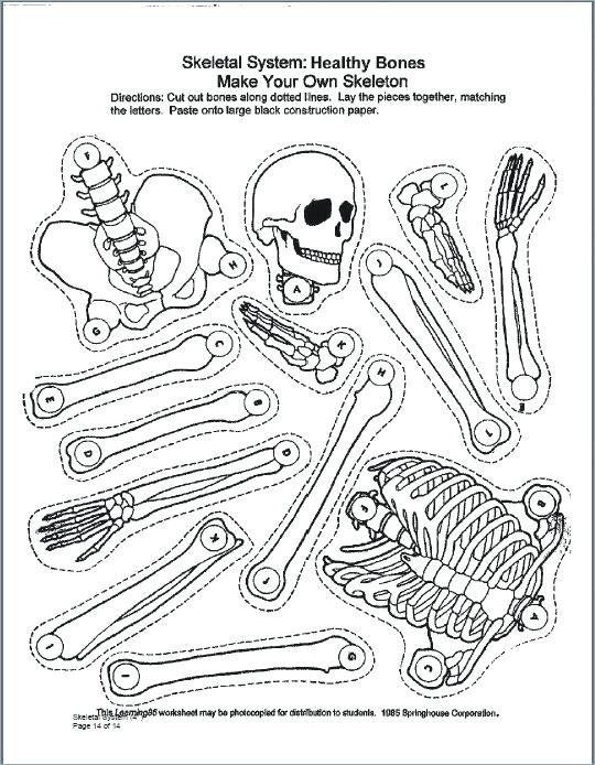540x694 Skeletal System Coloring Pages Nervous System Coloring Pages