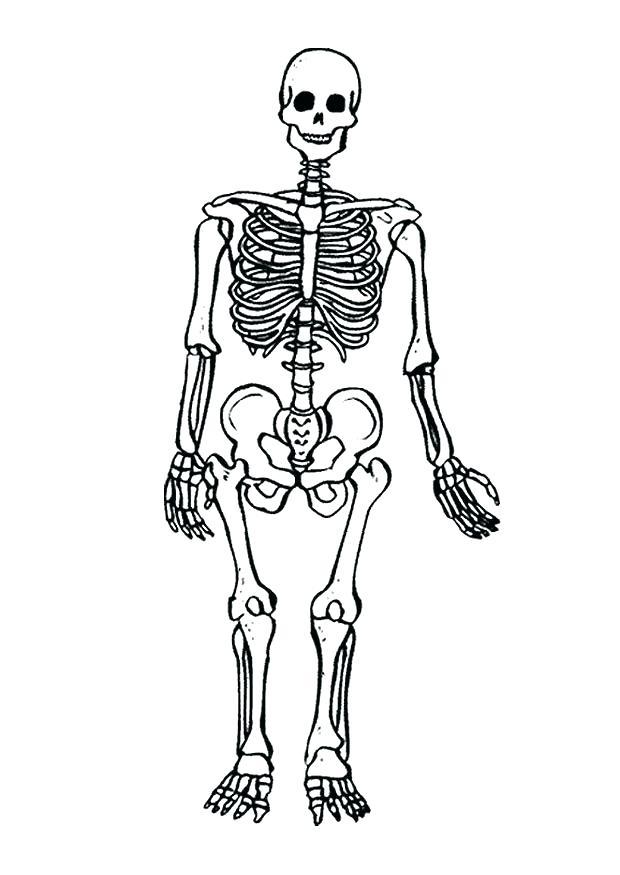 620x875 Skeletal System Coloring Pages Nervous System Coloring Worksheet