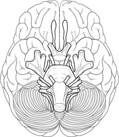 236x270 Human Brain Coloring Page Of Cranial Nerves