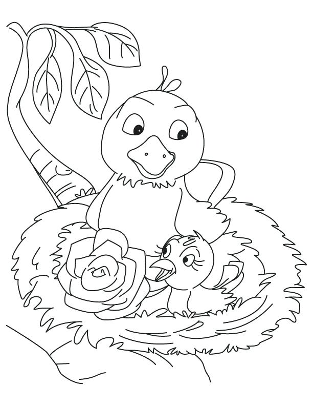 612x792 Bird Nest Coloring Page Pd The Best Nest Coloring Pages Page Home