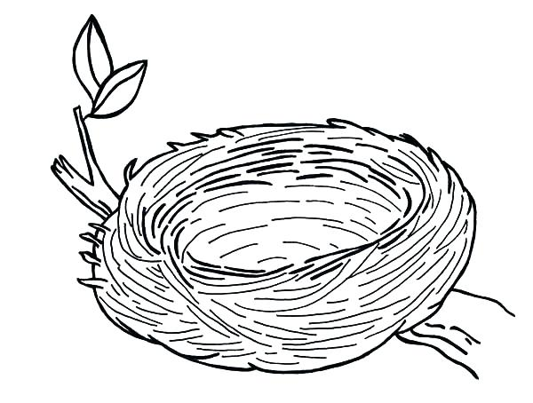 600x454 Bird Nest Coloring Page S Bird Nest Colouring Page