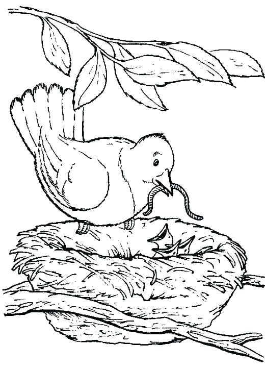 520x723 Bird Nest Coloring Page See Best Images Of Bird Nest Printable