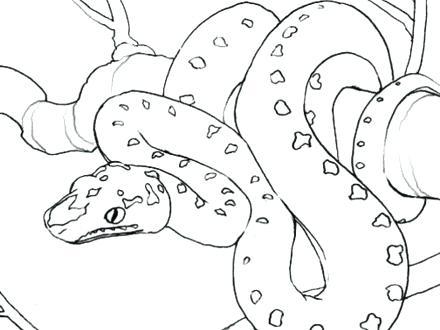 440x330 Reptile Coloring Page Reptile Coloring Page Free Printable