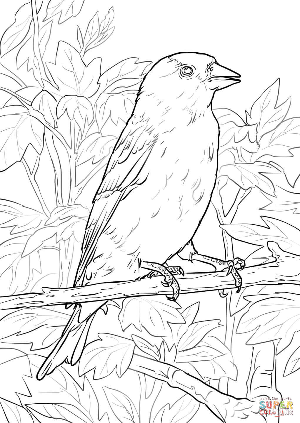 1020x1440 Fresh Purple Finch Coloring Page Pages For Kids Birds New
