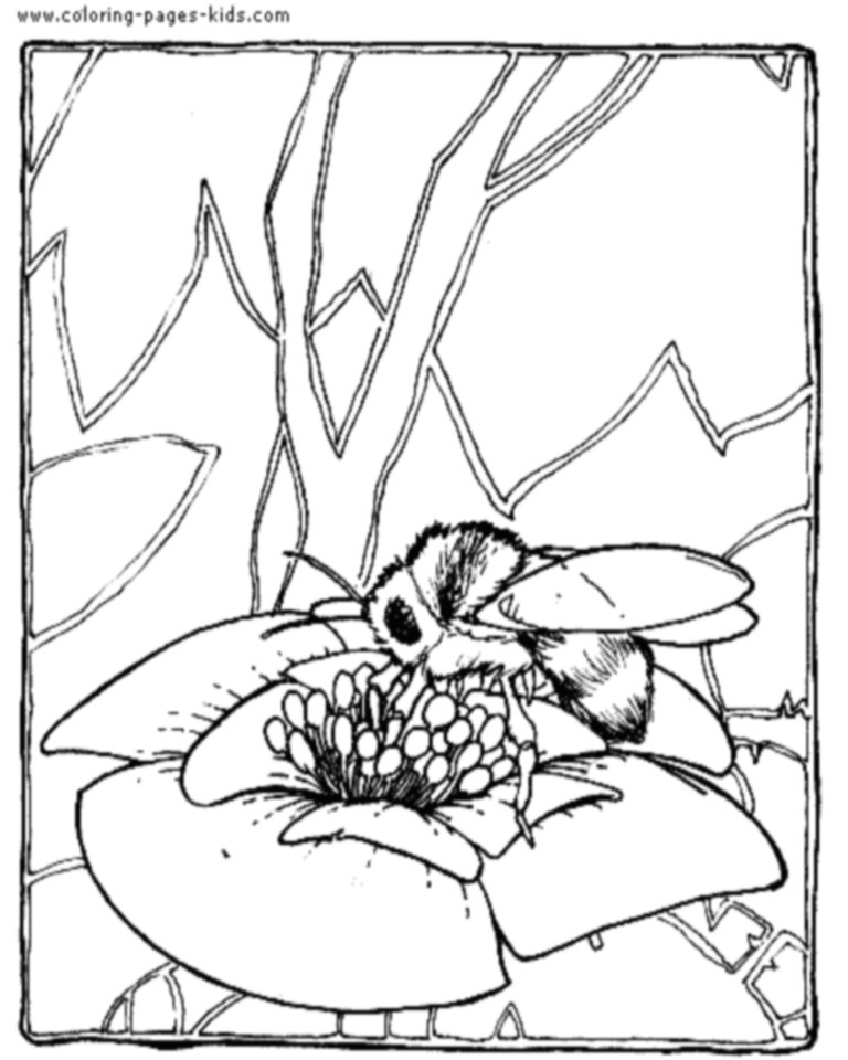 768x960 Bee Coloring Pages Bees On The Net