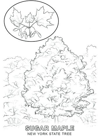 340x480 New York Coloring Pages New City Skyline Coloring Pages New York