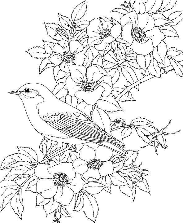 591x720 New York Bluebird Coloring Page Purple Kitty Drawings