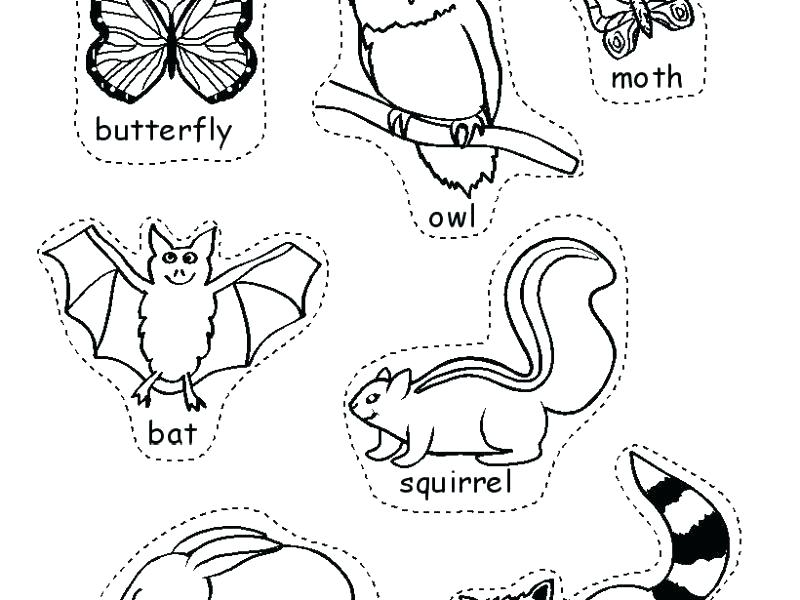 800x600 Hibernation Coloring Pages Nocturnal Animals Coloring Pages