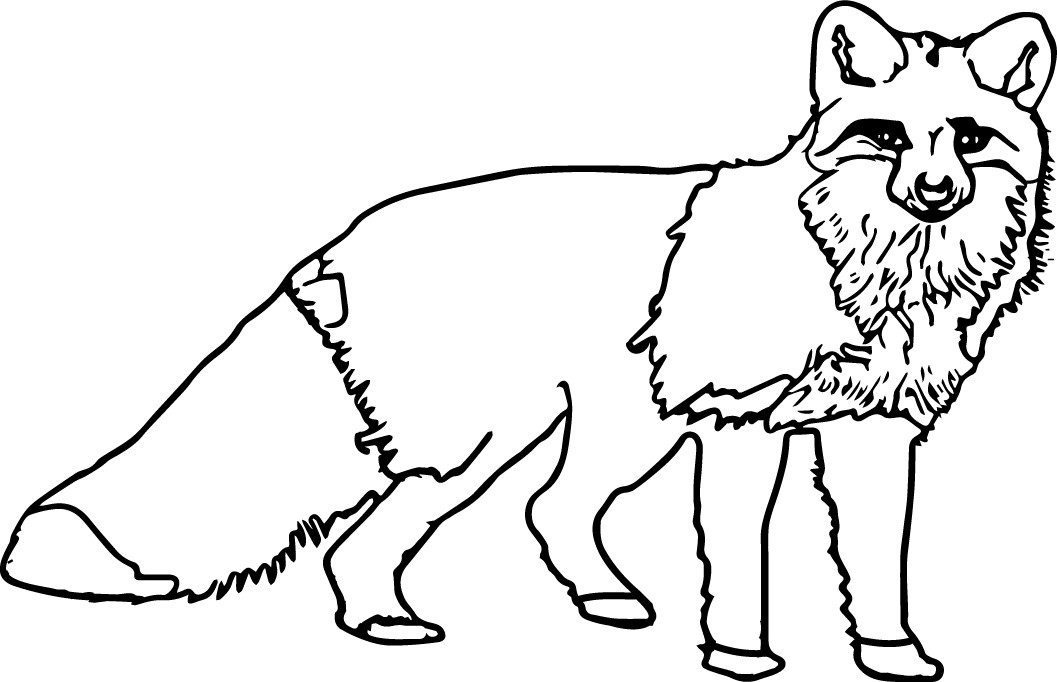 1057x682 Nocturnal Animals Coloring Pages