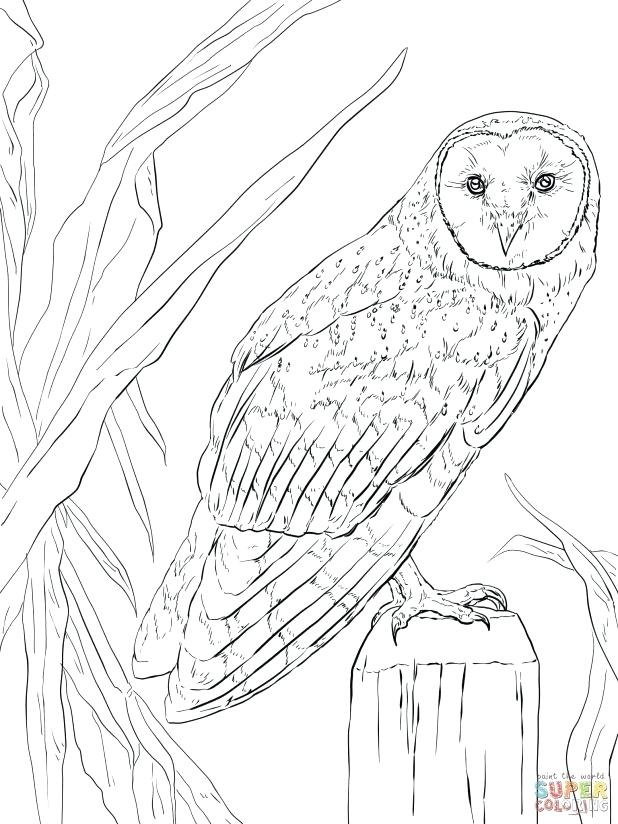 618x824 Nocturnal Animals Coloring Pages Adult Nocturnal Animals Coloring