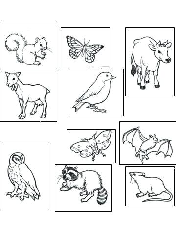 364x480 Nocturnal Animals Coloring Pages Animal Coloring Pages Nocturnal