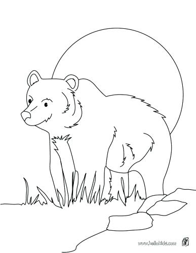 387x500 Nocturnal Animals Coloring Pages Nocturnal Animals Colouring
