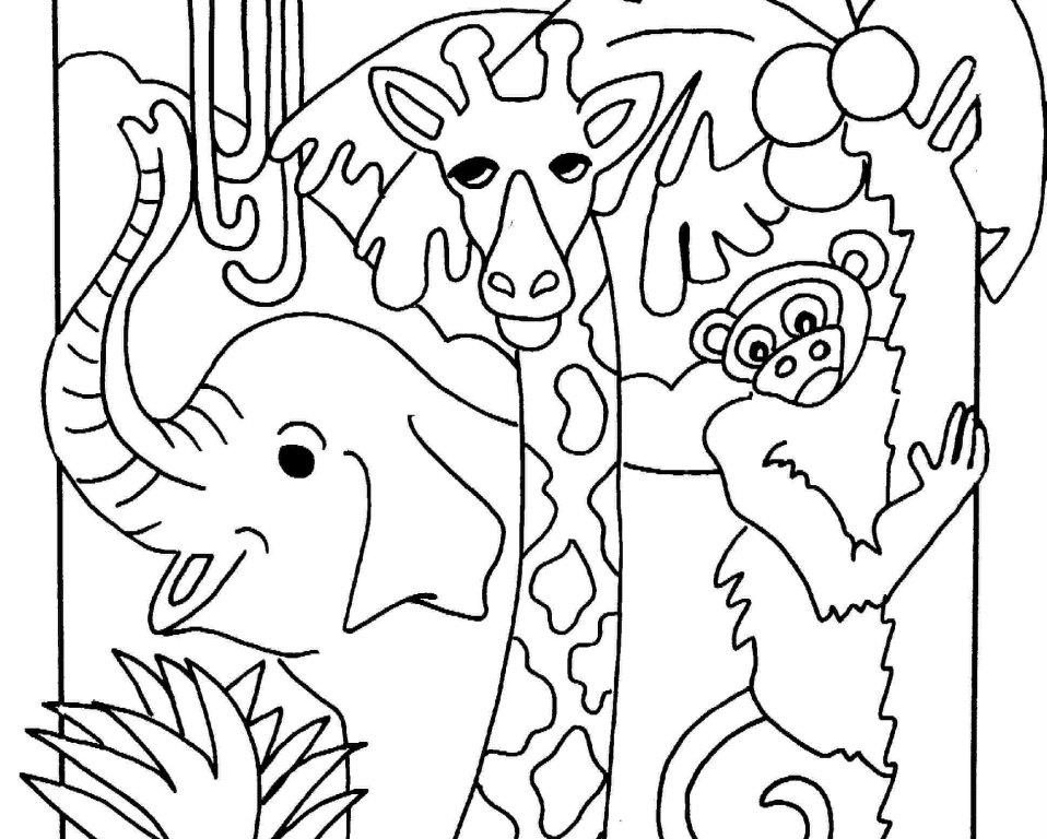 958x768 Nocturnal Animals Coloring Pages Page For Kids Impressive Free